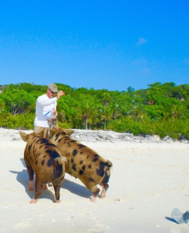 feed pig in the Bahamas