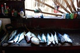 Yellowtail Jack, mackerel, bonita fish