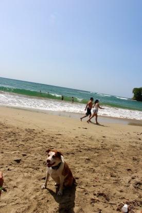 Bella at the beach!